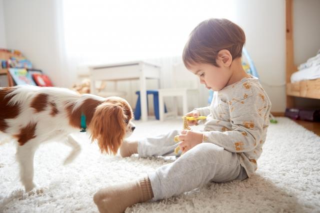 ペットと子供の画像